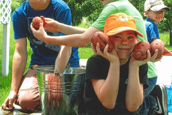 Potato Harvest Community Garden